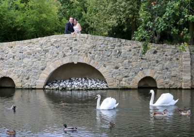 Langtons-swans